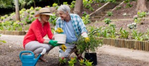 Elderly couple gardening