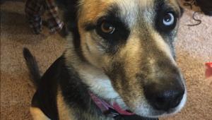 Life Goes On - Nelson's dog